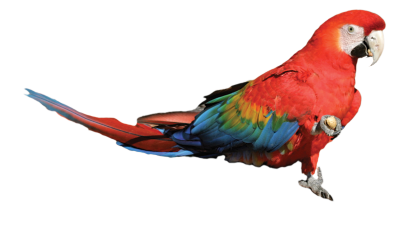 birdtricksters.com